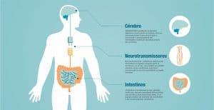 intestino-serotonina