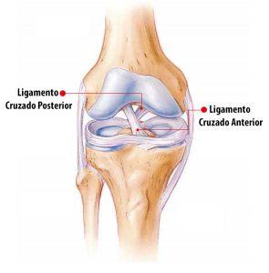 ligamento do joelho