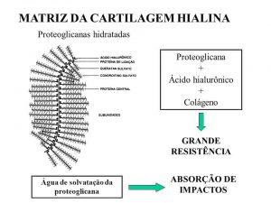ácido hialurônico para tratamento de artrose