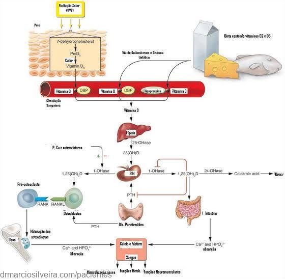 metabolismo do cálcio