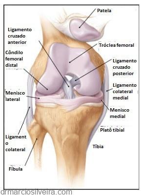 menisco e ligamentos