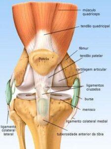 estruturas anteriores do joelho