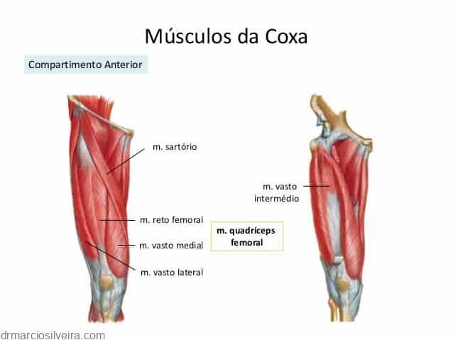 ruptura dos músculos anteriores da coxa quadriceps