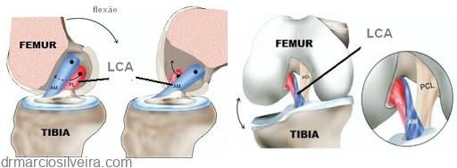 posição - Anatomia do Ligamento Cruzado Anterior